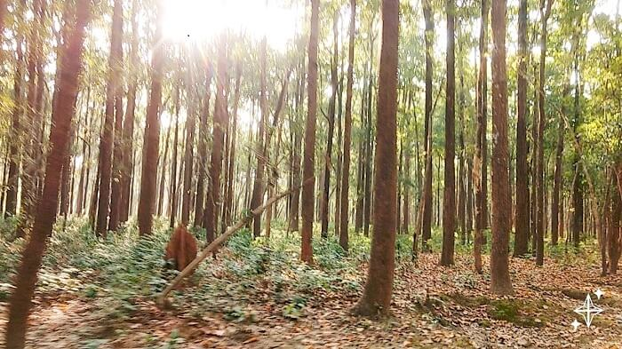 Forest in Jim Corbett