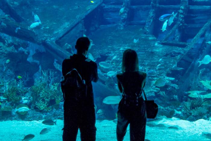 A couple at the S.E.A. Aquarium in Singapore