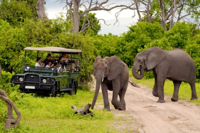 People watching elephant during a safari honeymoon in South Africa
