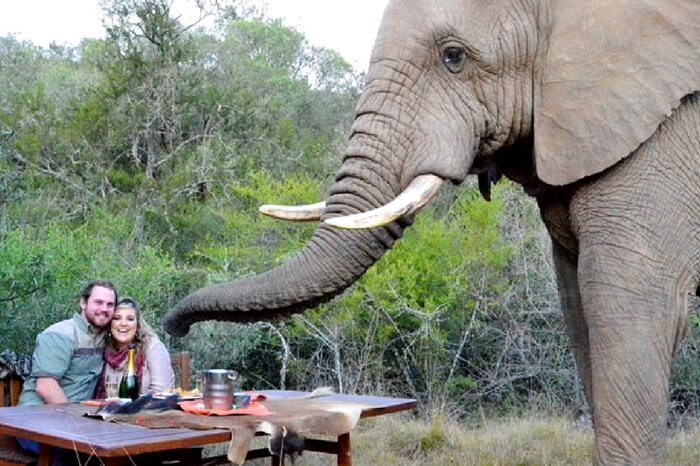 Couple dining with an elephant standing by during a safari honeymoon in South Africa