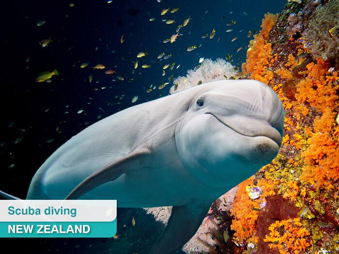 Marine life in New Zealand