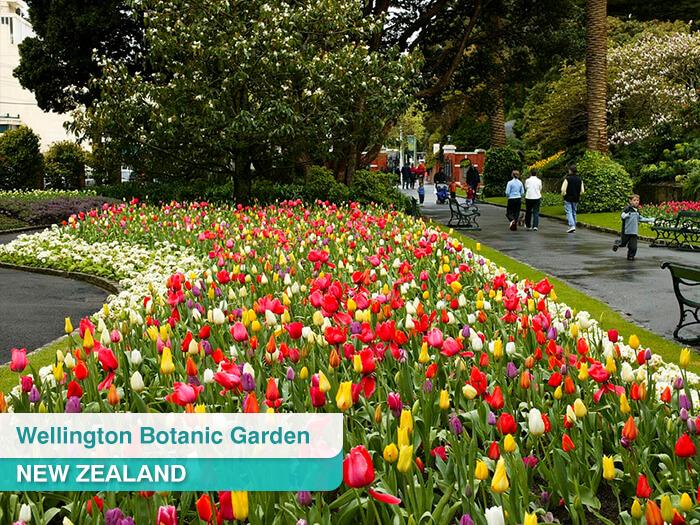 Wellington Botanic Garden in New Zealand