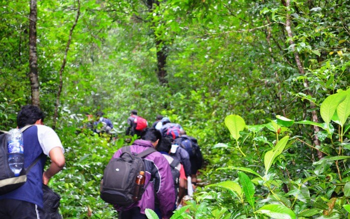Youths crossing the forest while taking up adventure treks in Karnataka