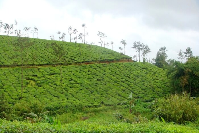 coorg duration