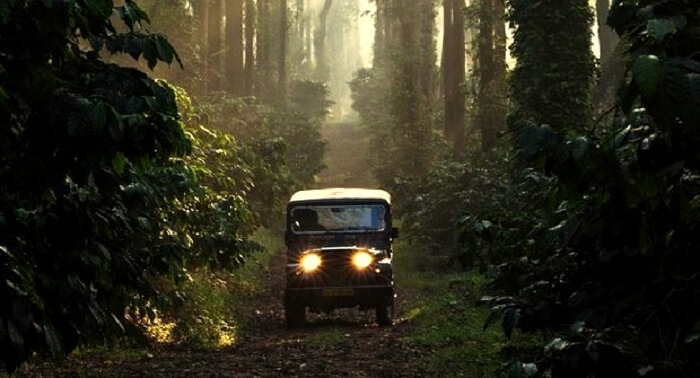 drive at sunset coorg