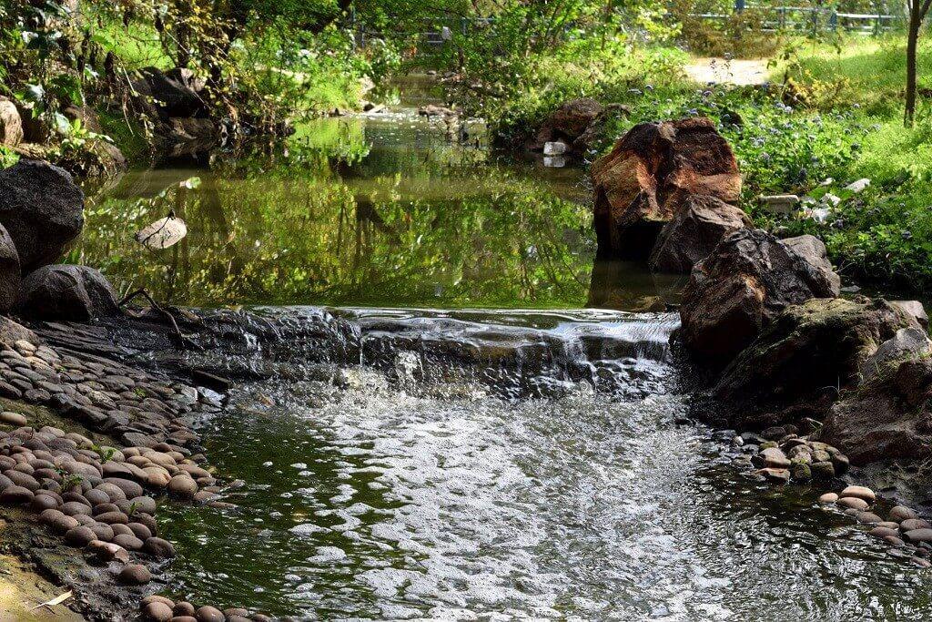 a small pond in Smriti Van Jaipur