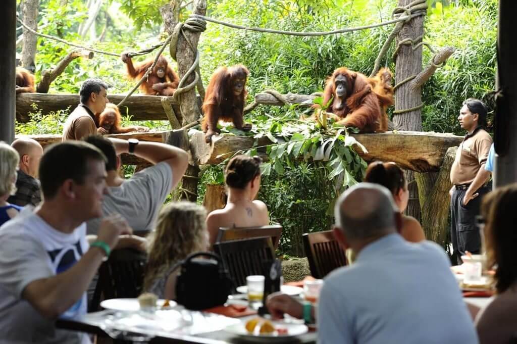 People having breakfast with Orangutans around