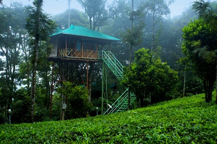 Spare your few days to stay in tree house