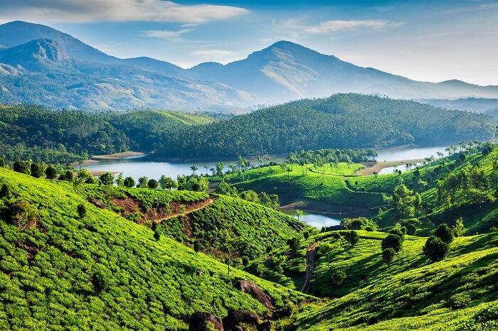 sky view of green Kerala