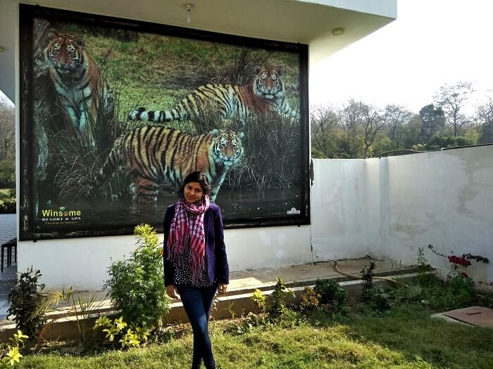 picture with tigers in the picture