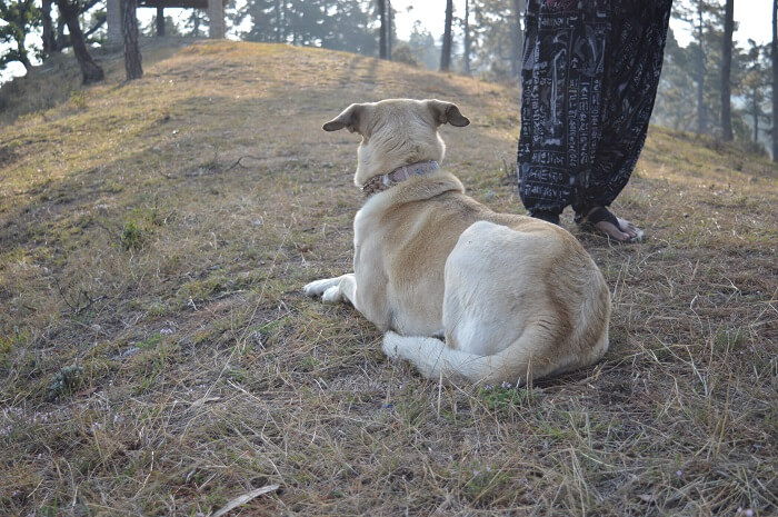 a loyal companion in binsar