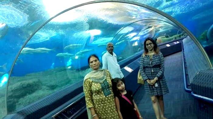 Marine park aquarium