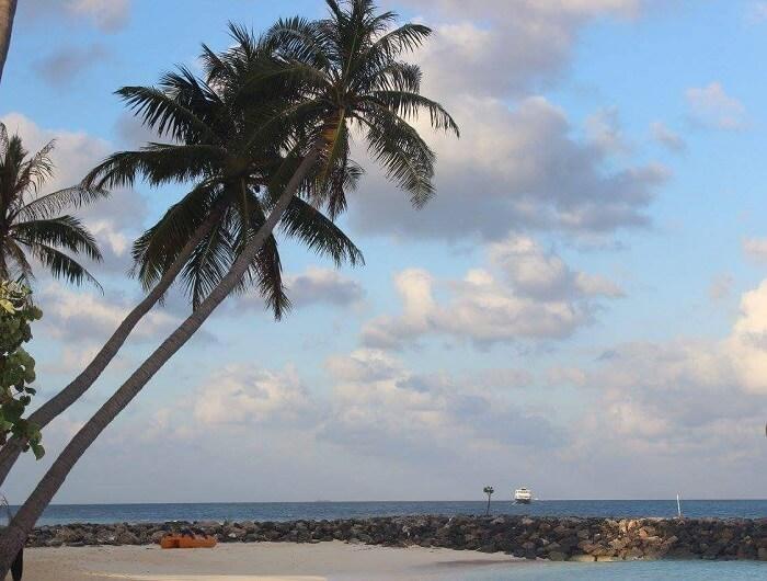 palm trees maldives beach