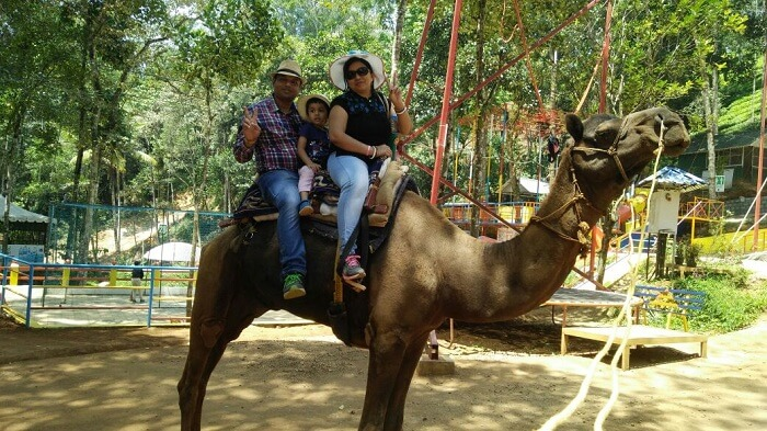 camel ride munnar
