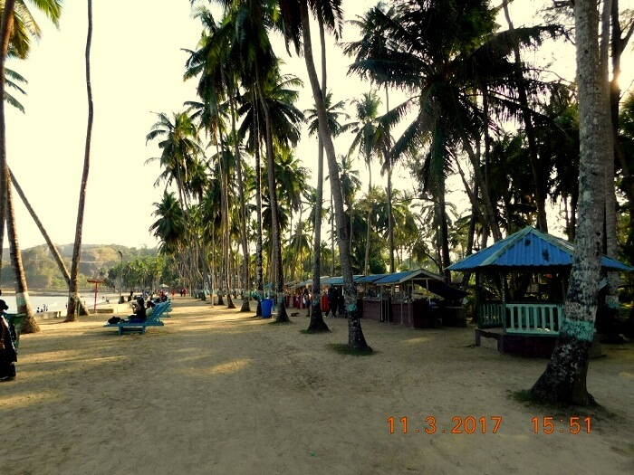 trees and beach andaman