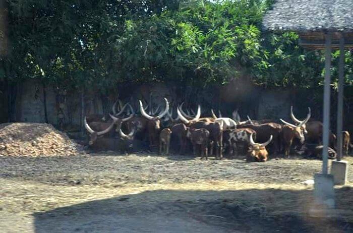 safari world animals