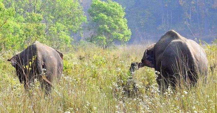 elephant seen in jim corbett