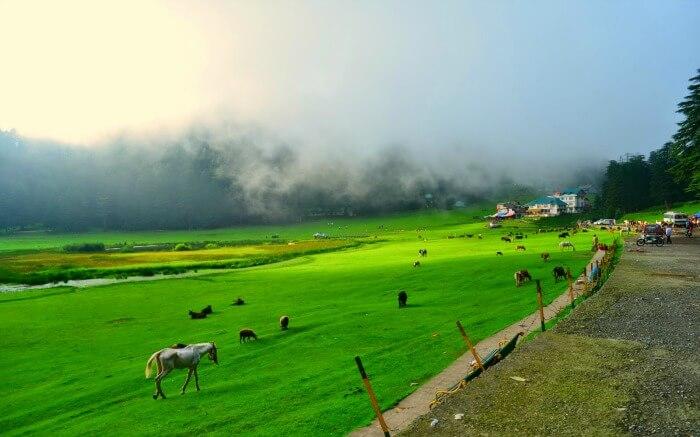 Mist-laden Khajjiar