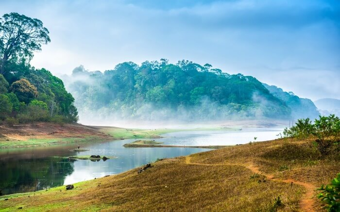 Landscape of Periyar National Parkss