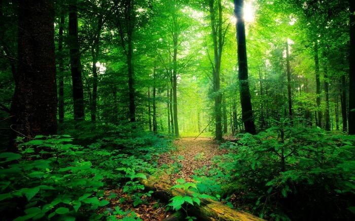 Lush green environs of Mangalavanam Bird Sanctuary
