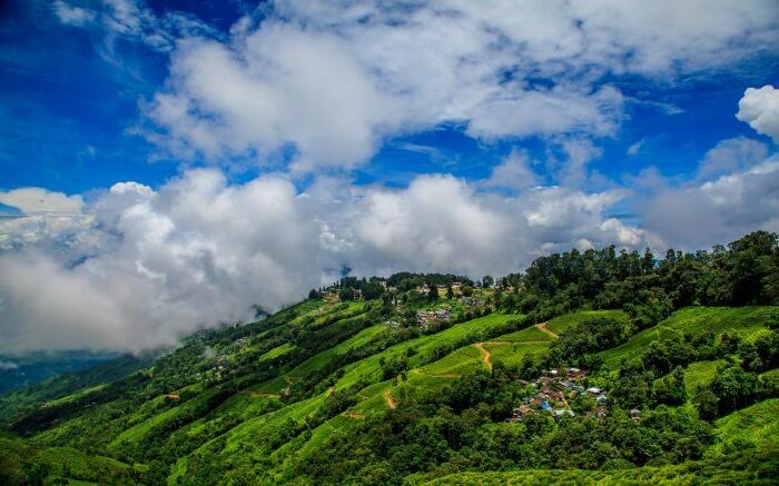 Scenic tea gardens in Darjeelingss