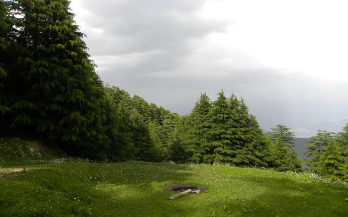 Shot of Kalatop Khajjiar Sanctuary