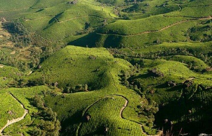 Top view of plantations in Peermade in Idukki
