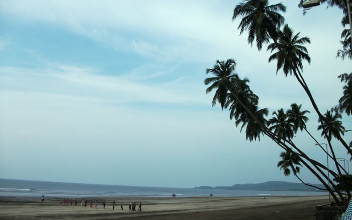 palm trees on the shores of Murud Beach