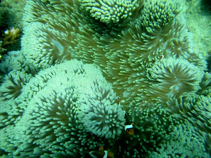 rich coral reef in Bali