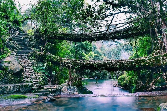 Root bridge in Mawlynnong, Meghalaya