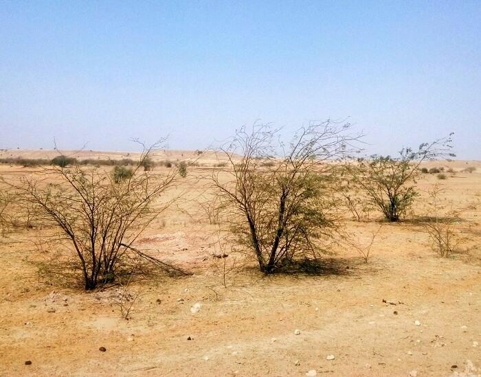 desert terrain in jaisalmer