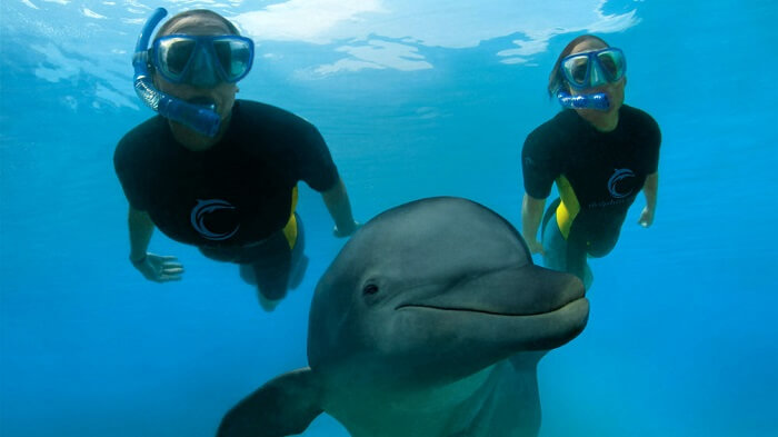 Swimming with Dolphins in Out Islands, Bahamas