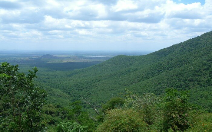 BR hills near Mangalore