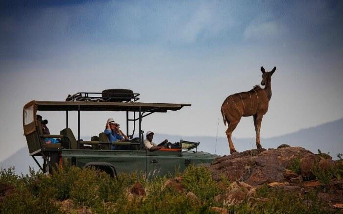 Couple enjoying safari and game viewing in Kenya