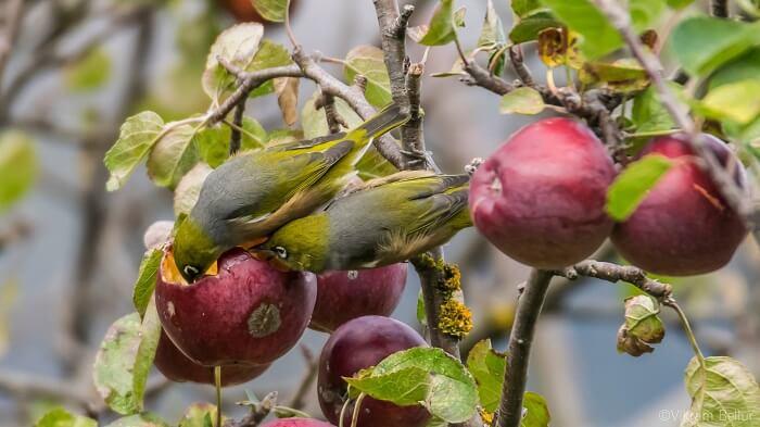 birds in new zealand