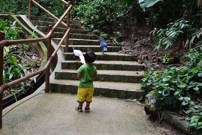 Jurong Bird Park Malaysia