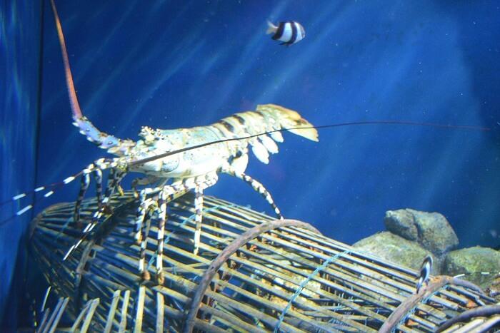 Aquarium in sentosa island
