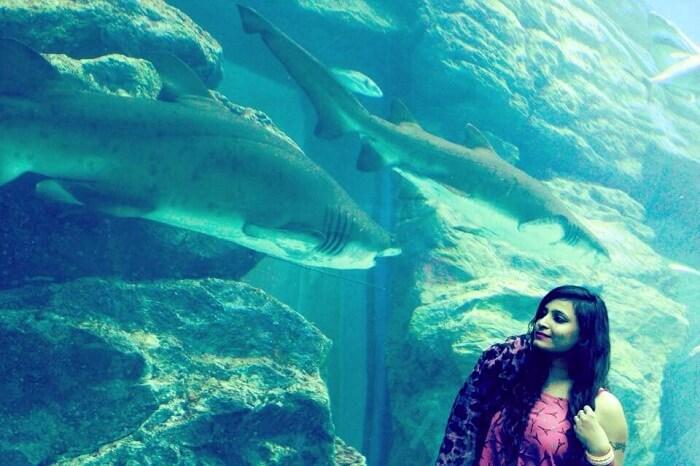 Underwater zoo Dubai