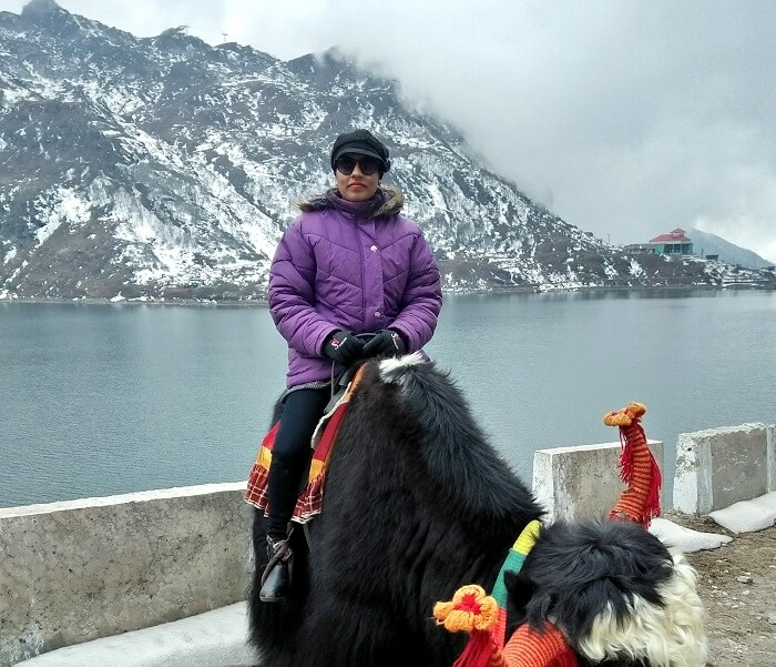 yak riding in sikkim
