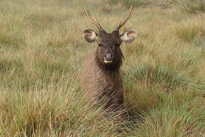 Horton Plains National Park Ohiya