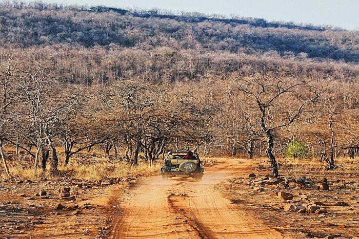 How to reach Panna National Park