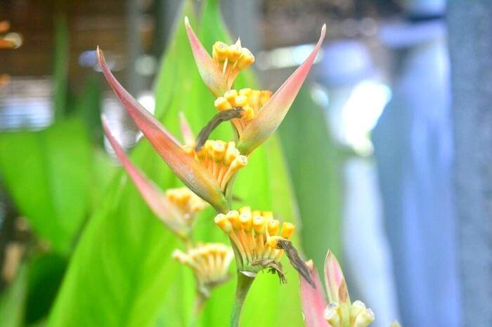 Mauritius spring flowers