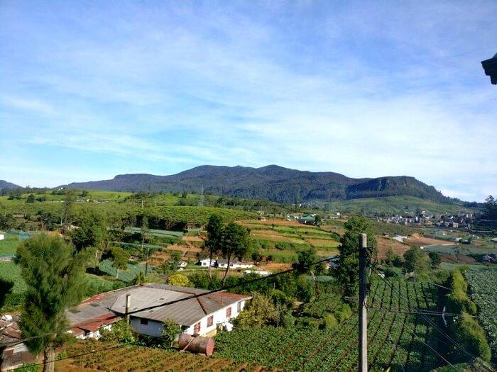 scenic view of nuwara eliya