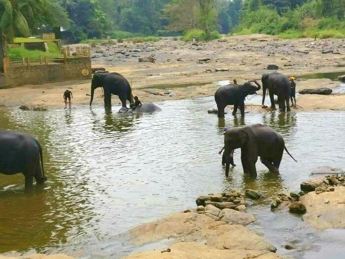 elephant resort in pinawala