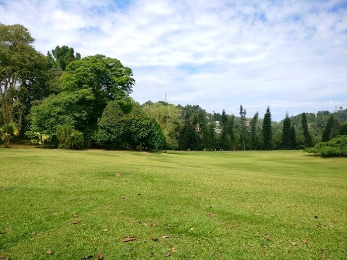 lush green views in sri lanka