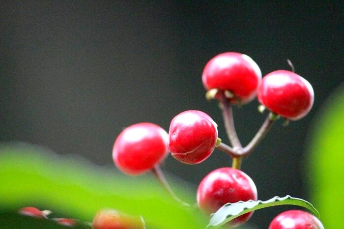 close up photo of wild berries