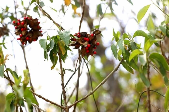 nature in rishikesh