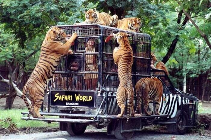 safari world in bagkok