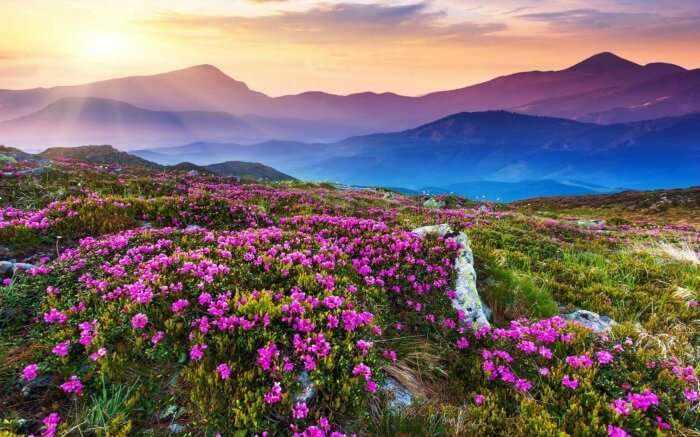 Valley of flowers in Uttarakhand V