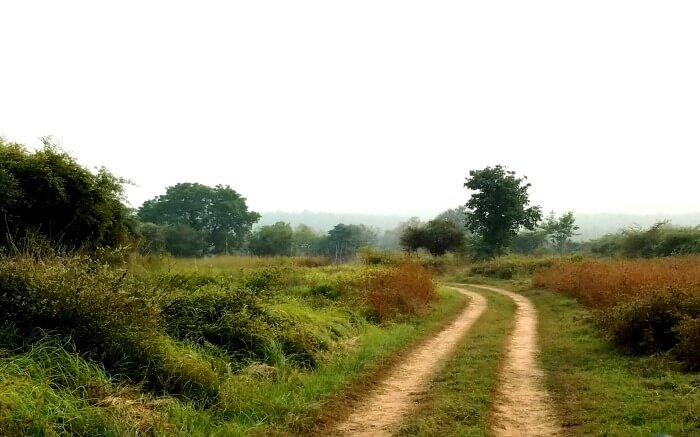 a trail in Sanjay-Dubri National Park And Wildlife Sanctuary